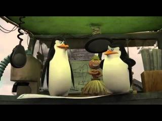 Пингвины мадагаскара. Полетит ли?