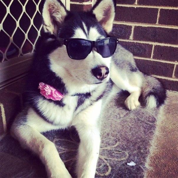 Картинки на аву вк для пацанов собака