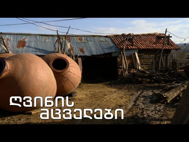 ქართული დოკუმენტალისტიკა - ღვინის მცველ4308