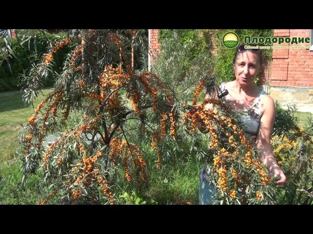 Прогулка по природному саду. В гостях у Юлии Чешковой.