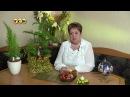 Араукария Цветочная лавка