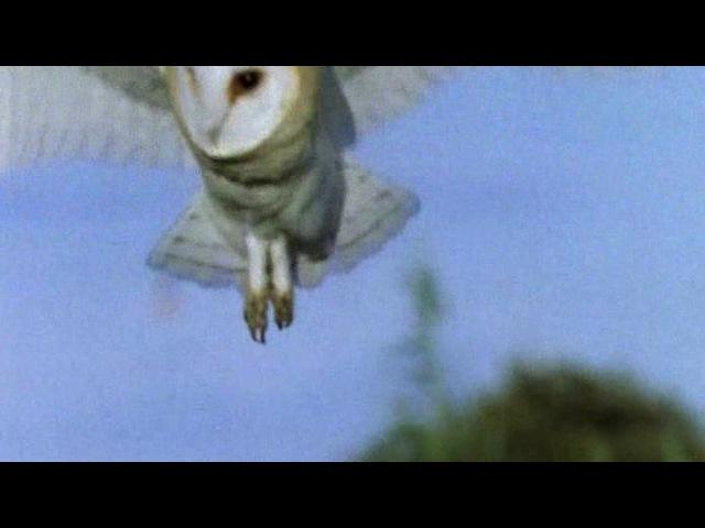 BBC Жизнь птиц Мастера полета 2 серия