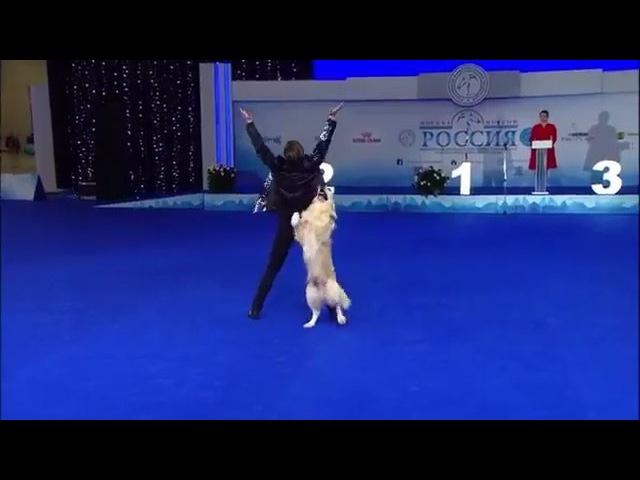 Это невероятно 1 место Чемпионата РКФ по танцам с собаками Волков Илья и мегаумный и музыкальный ретривер Ллойд выиграли в классе Мастер Фристайл Просто браво TheOnlyOne рад что для своего выступления они выбрали мою пе
