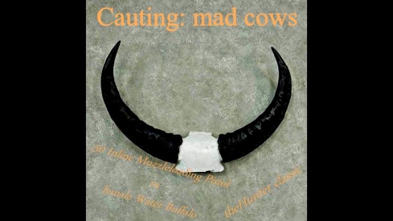 Бешеные коровы