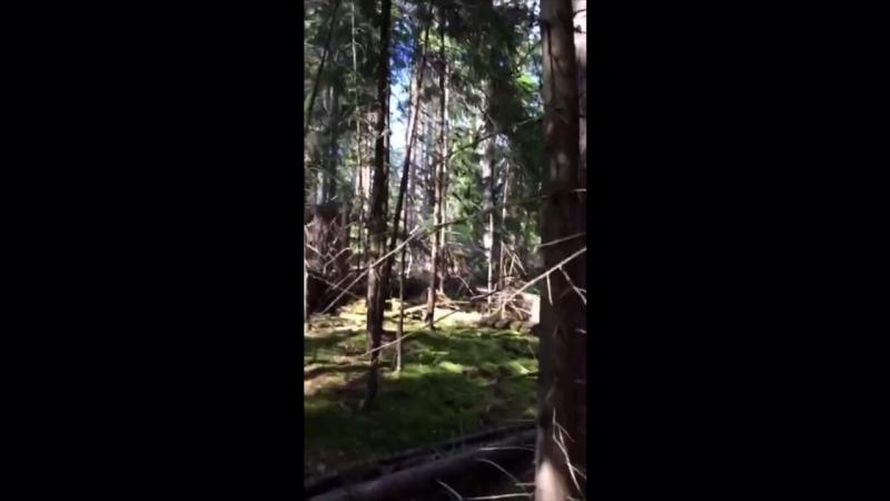 девочки в лесу смотреть без регистрации и смс