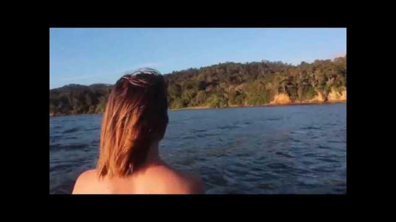 Golden Retriever - Pelagic Tremor