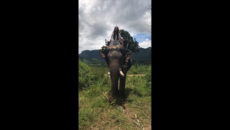 T H A I L A N D .Elephant riding.