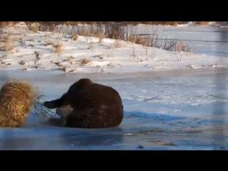 Русский мишка жгёт. (russian bear they may burn))))