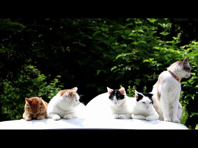 軽トラの屋根の上の6匹の猫 170922