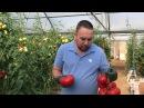 Как вырастить томаты помидоры в теплице Выращивание томатов в теплицах продлённый оборот