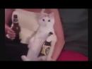 Классные приколы про животных. Смешная подборка с котами и кошками. Самые смешные видео online-video-cutter