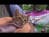 Урок доброты: пострадавшим от землетрясения животным помогают в Мексике