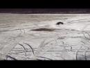 TRAXXAS SLASH VLX 2wd - winter ride