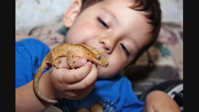 Общение ребёнка с реснитчатым бананоедом