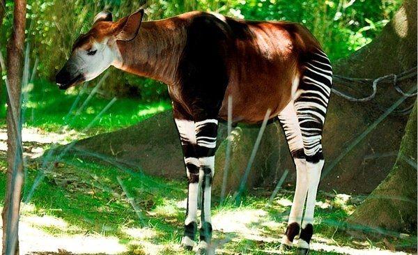 Самые удивительные животные, оставшиеся на земле в единственном экземпляре, изображение №5