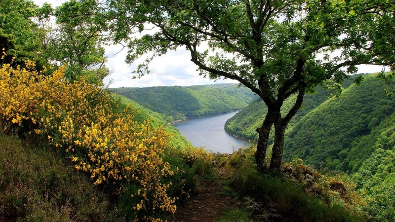 Картинка природа Весна леса красиво bilde natur vår skog vakker JPEG