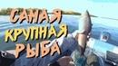 Крупный хариус / Вкусные рыбные котлеты рецепт / Засолка рыбы / Баня своими руками