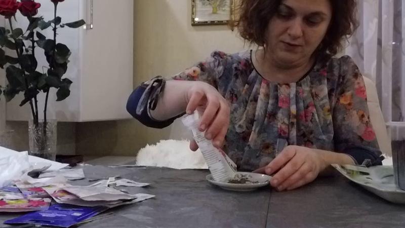 высеиваем ромашку пиретрум в домашних условиях на рассаду