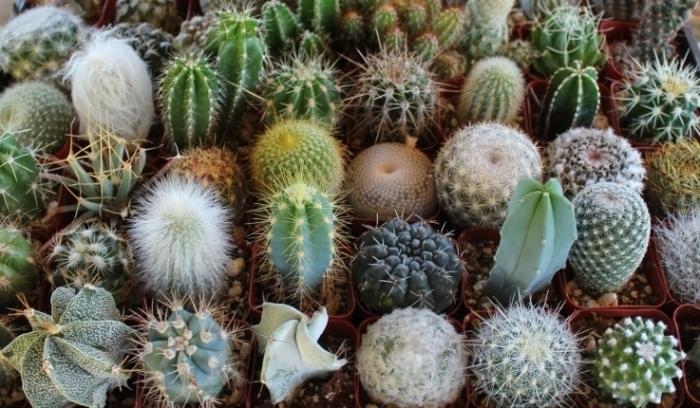 5 причин, почему тебе нужно завести хотя бы один кактус