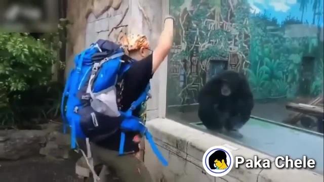 Who's monkey now? | Ну и кто теперь обезьяна?