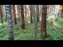 В тёмно-синем лесу, где трепещут осины...