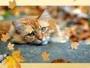 Осень как рыжая кошка