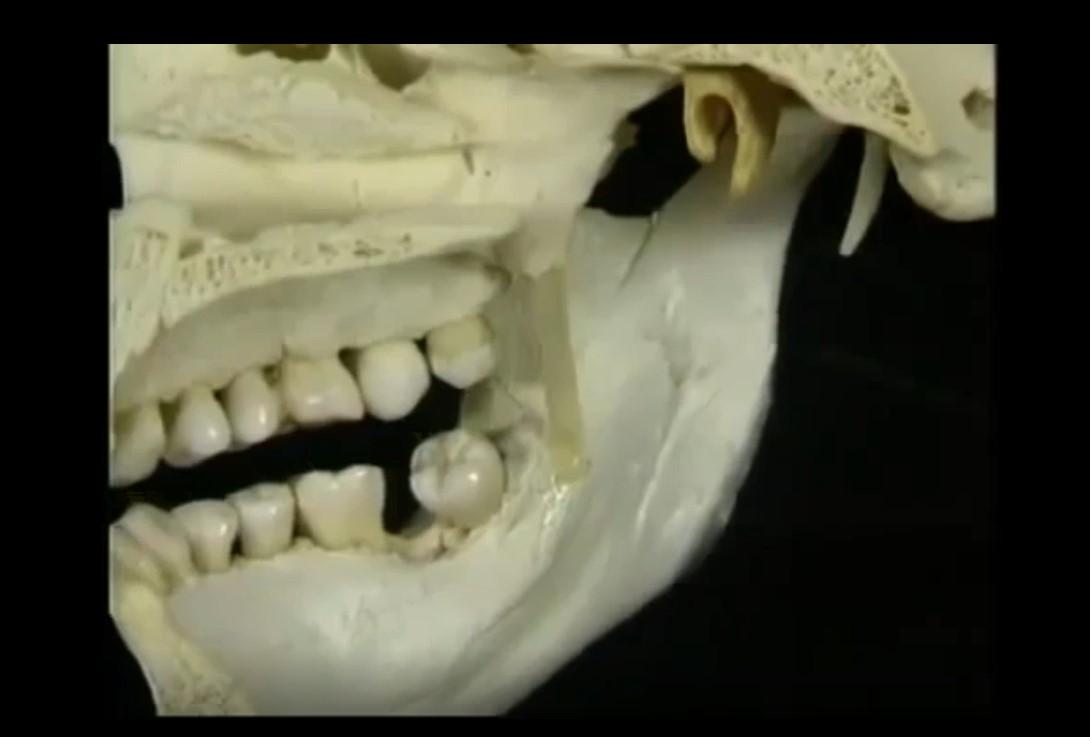 anatomiya-golovy-i-shei