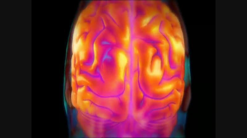 Тело человека Грани возможного Человеческий мозг