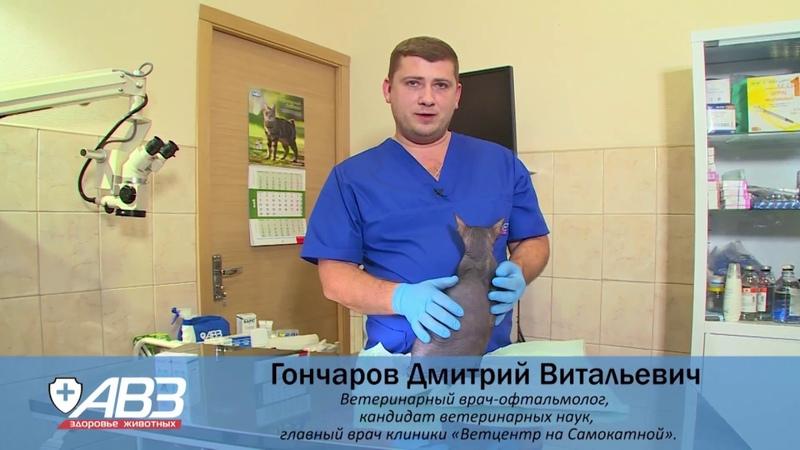 Как почистить уши животному