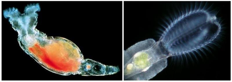 Интересно знать — факты о ДНК, изображение №2