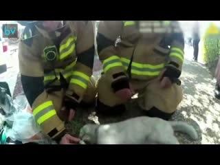 Пожарные спасают двух котеек с того света после пожара в одном из жилых домов