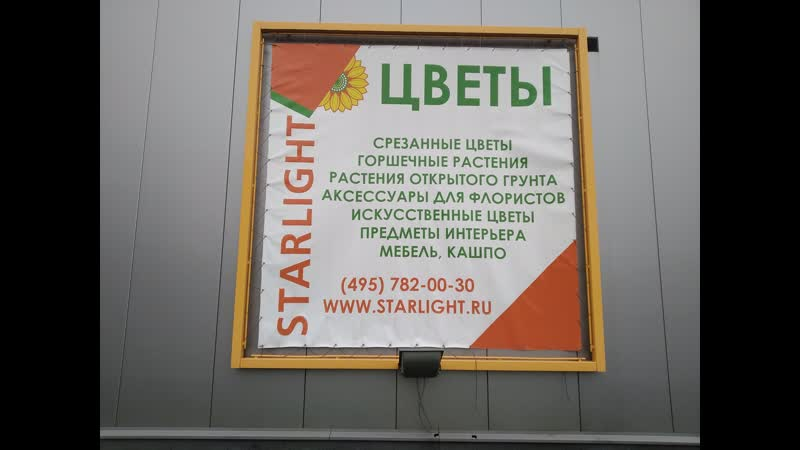 Фикус в Конаково