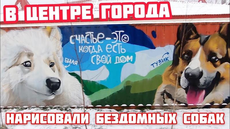 Нарисовали в центре города бездомных собак. Биля и Тузик.