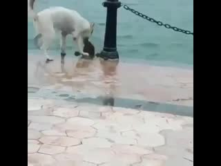 This dog is rescued his friend who slipped and fell in the water