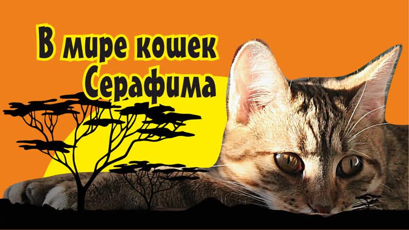 В мире кошек Серафима