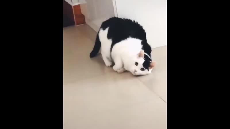 Кот-модель. Animal Planet