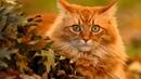 Красивые рыжие кошки осенью показ слайдов 2015!