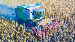 CLAAS LEXION - Beast Combine Grain Harvest!