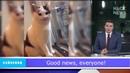 Так выглядит кот хозяин которого передумал