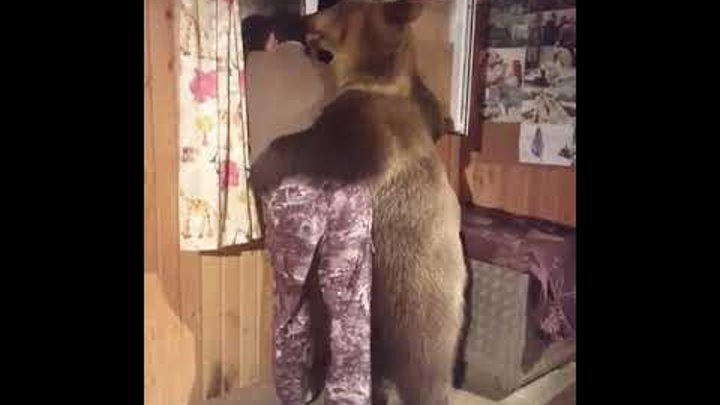 Медведь обнимает мужика