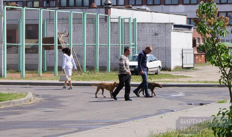 В Бресте питбуль напал на мужчину и откусил ему важный орган, ищем очевидцев и собаку