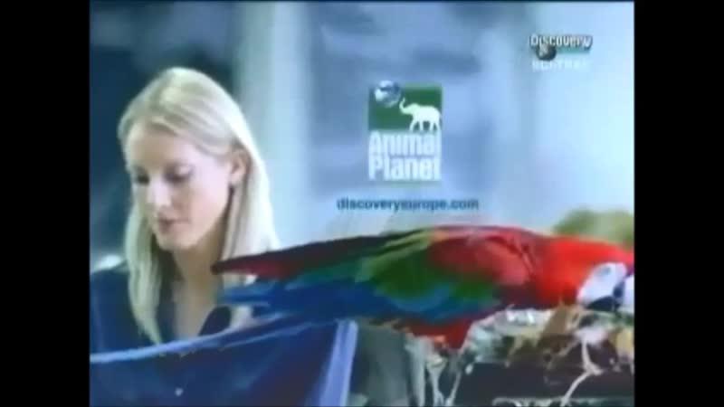 Проморолик канала Animal Planet 2000 2004 г 11