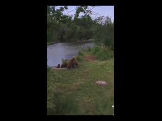 Медведица с медвежатами пришла к отдыхающим... 🐻