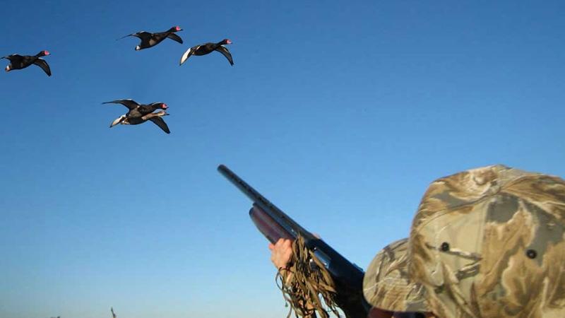 Сотрудники Росгвардии будут выявлять нарушения в сфере оборота оружия и осуществления охоты