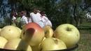 Какие традиции празднования Яблочного Спаса в белорусской деревне