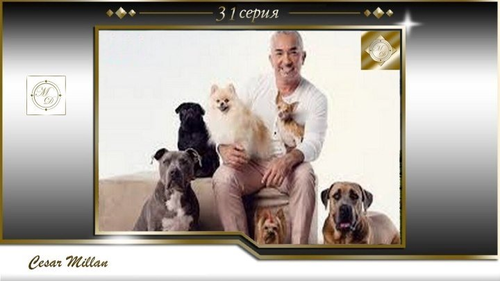 31 серия Сезар Миллан Переводчик с собачьего Bady Rotveler sobaki str koshka