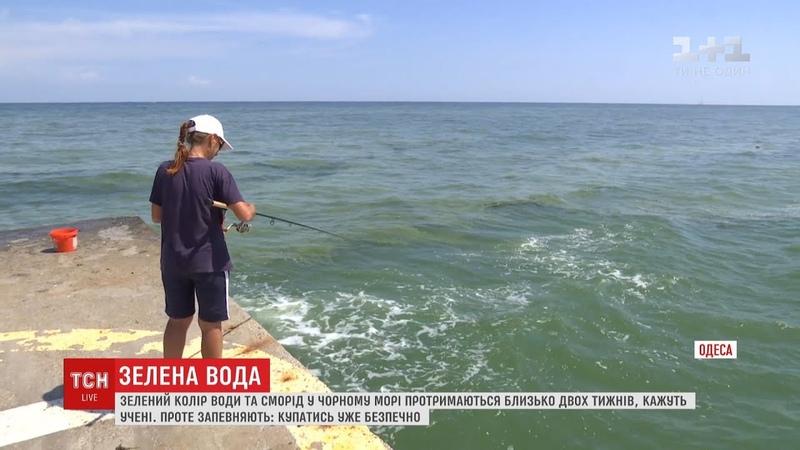 Зелена вода у Чорному морі вже не шкодить здоров'ю людини екологи