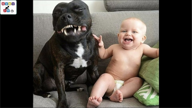 Cute dog The dog's reaction to the baby for the first time is super fun