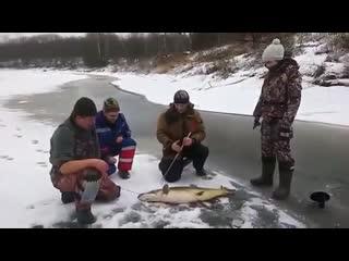 Вот такая щучка с зимней рыбалки,это просто монстр😱