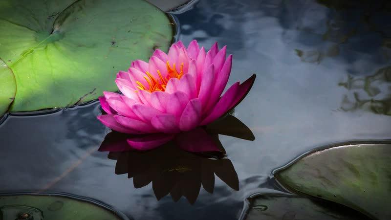Как вырастить планету Сила цветов 2012